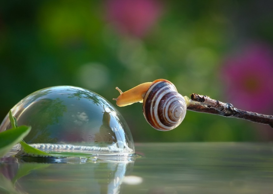 the snail and the bubble